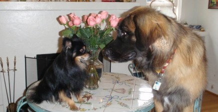 Our Two Dogs when the Leonberger was just a Puppy