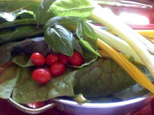 Today's Harvest - grape tomatoes, colorful Swiid chard, fresh basil