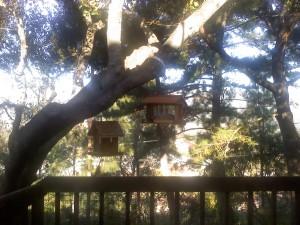 New Bird Feeder Set-Up Gets Feather's Up from Black-headed Grosbeak